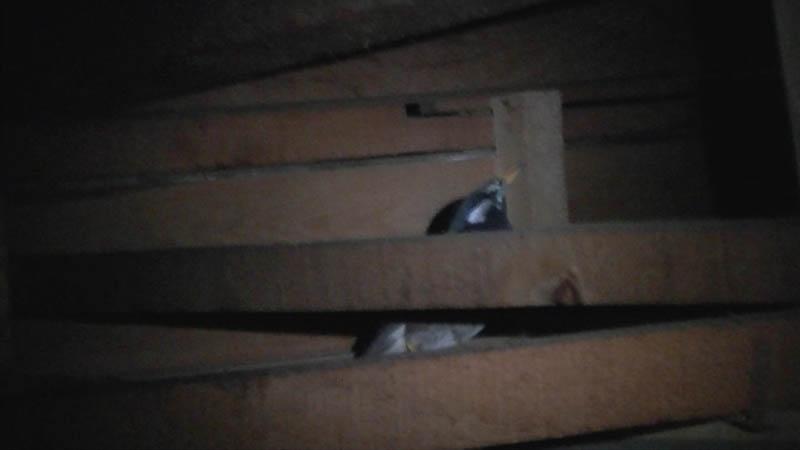屋根裏映像の一部